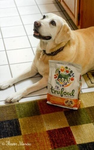 Rosie - Yellow Labrador Retriever Dog